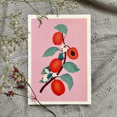 SOLEON ILLUSTRATION - Illustrations - Papeterie